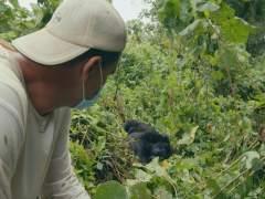 'Wild Frank' se adentra en el Virunga africano para conocer a los últimos gorilas de montaña