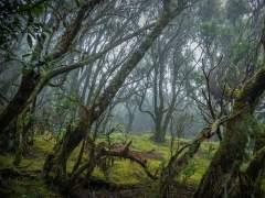 Turismo, cambio climático, especies invasoras... entre los retos de los Parques Nacionales