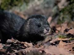 Siete especies españolas entran este jueves en la categoría de situación crítica