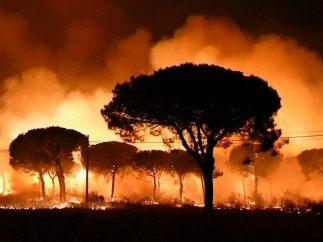 Incendio en Doñana