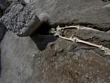 Esqueleto en Pompeya