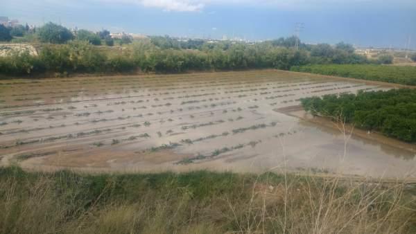 Campo de calabazas anegado en Catarroja