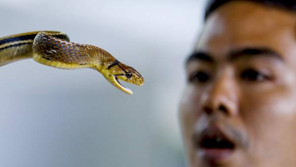 Las mordeduras de serpiente