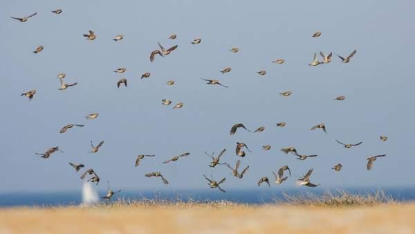 Aves del Parque del Estrecho de Gibraltar