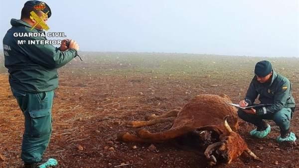 Vaca muerta por maltrato animal