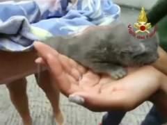 Bomberos italianos rescatan a tres gatitos atrapados en una tubería