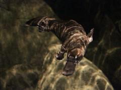 Así era el pez-ornitorrinco que habitaba en Australia hace millones de años