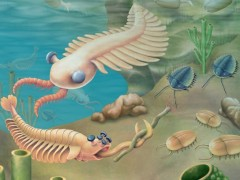 Descubren en China el fósil de una nueva especie del periodo Cámbrico