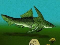 Reconstruyen el prehistórico 'pez-ornitorrinco' australiano a partir de fósiles