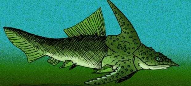 "Brindabellaspis stensioi, el prehistórico ""pez-ornitorrinco"" australiano."