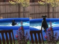 La reacción de un perro pillado por su dueño en la piscina que arrasa en Facebook