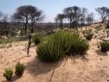La vida brota en Doñana