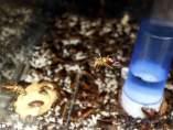 Detalle de una jaula de cucarachas en los laboratorios de la empresa de control de plagas Mylva.