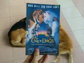 'Como perros y gatos' (2001)