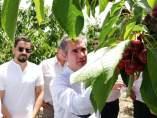 El consejero Del Amor, durante su visita a la finca de cerezas