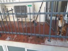 Rescatan a una perra abandonada sin comida ni agua en un balcón.