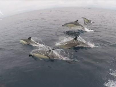 Delfines mulares Rías Baixas