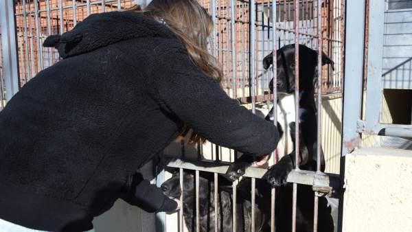 Nota Adopciones Albergue De Animales