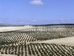 Ecologistas en Acción acusa a las instituciones de no apoyar los proyectos agroecológicos españoles