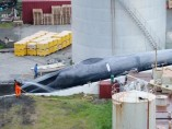 Balleneros islandeses matan a una supuesta ballena azul