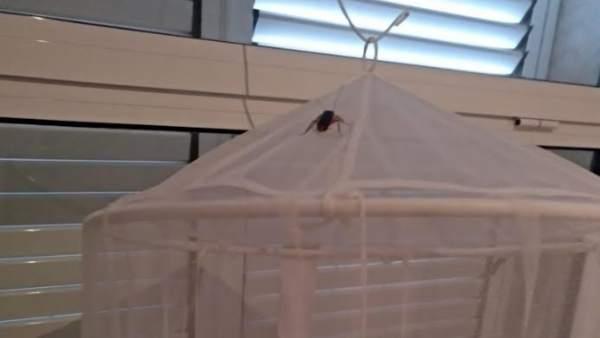 Satse denuncia una plaga de panderoles en l'ambulatori de l'Eliana amb insectes que cauen damunt de persones