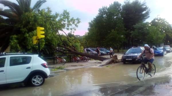 La fuerte tromba de agua y granizo ha derribado decena de árboles