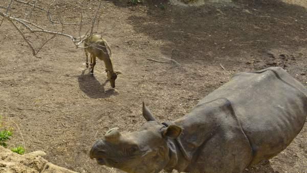 Un rinoceronte en Terra Natura Benidorm