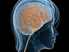 Cada persona tiene una anatomía cerebral única, como las huellas dactilares