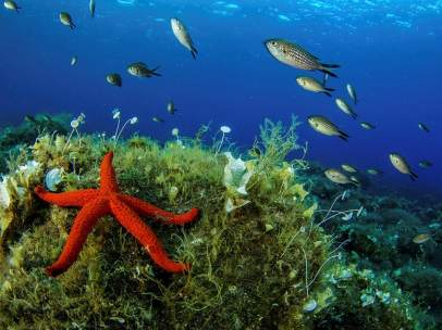Fondo del mar Mediterráneo