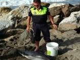 Cría de delfín varado en Vélez-Málaga
