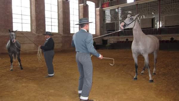 Trabajo con caballos en Caballerizas Reales