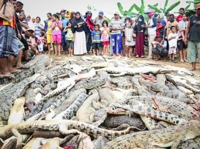 Cocodrilos masacrados