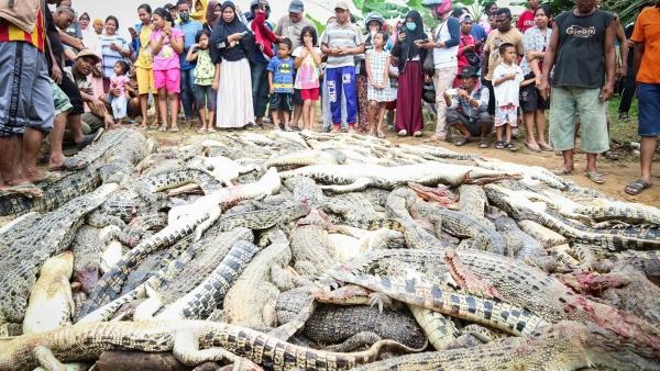 Resultado de imagen para 292 cocodrilos masacrados