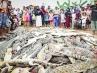 Matan 292 cocodrilos de un refugio como venganza por la muerte de un vecino