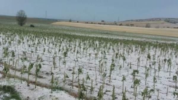 Una tierra afectada por el pedrisco en Palencia 17-7-2018