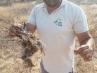 Las autoridades israelíes denuncian que los palestinos han empleado un cernícalo incendiario