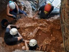 Descubierto el esqueleto de una especie extinguida de rinoceronte en Castelldefels