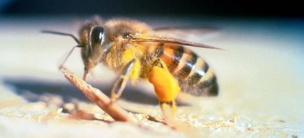 Una mujer, en estado grave tras sufrir al menos 200 picaduras de abejas africanizadas