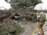 Caída de una rama en la Universidad de Navarra