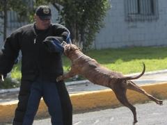 Una unidad canina ayuda a encontrar drogas y frenar motines en las peligrosas cárceles mexicanas