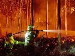 Aumentan los delitos por maltrato a los animales y por incendios