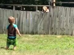 Ni una valla es capaz de evitar que este pequeño de dos años juegue con su 'mejor amigo'