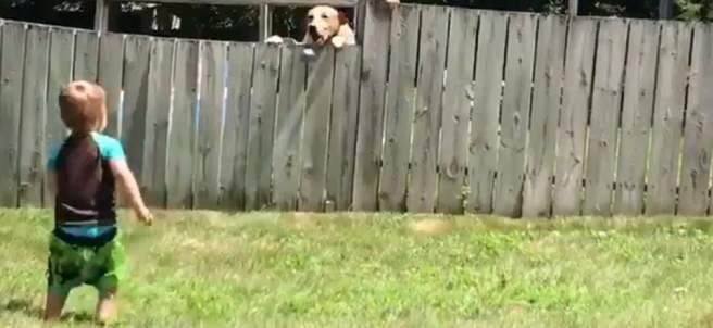 Imágen del vídeo del niño que juega con el perro. @CMNelsonPhoto