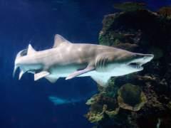 Reabiertas unas playas de Nueva York después de que dos niños fueran atacados por tiburones