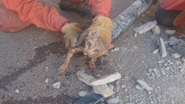 Gato rescatado en Cheste (Valencia)