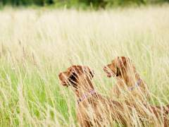 Estudian a 200 perros para saber cómo piensan
