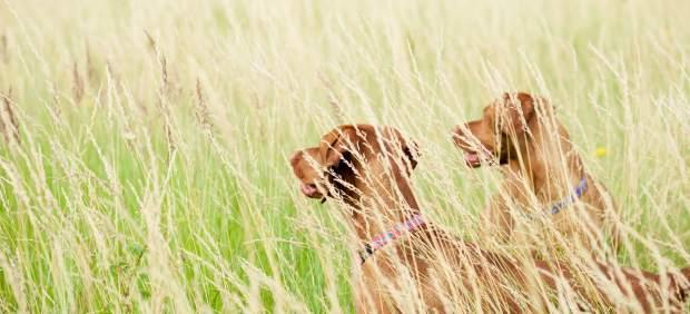 La Universidad de Nebraska estudia a 200 perros para saber cómo piensan