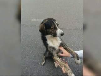 El perro que rescató a un ciclista en Rumanía