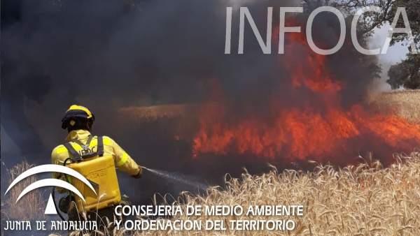 Un bombero del Infoca ataca las llamas en un campo de cereales