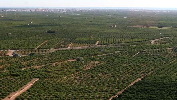 Aumenta la superficie de tierras arables en la Comunitat. Cultivos.